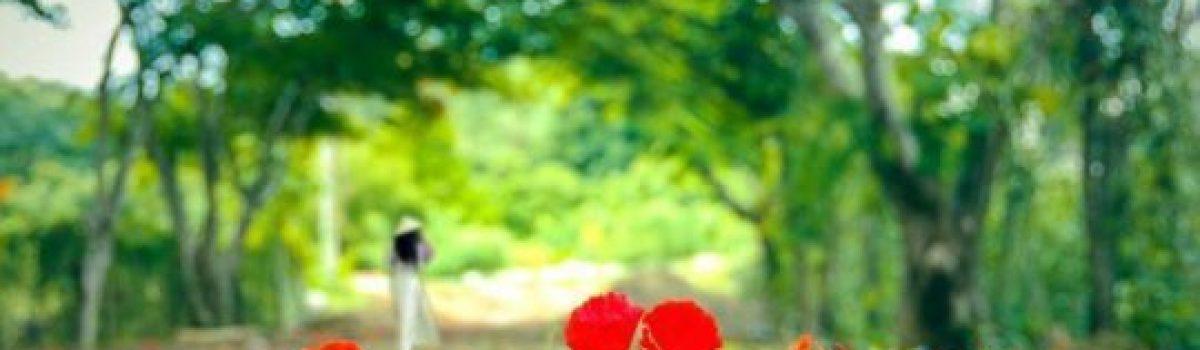Hờn dỗi – thơ Cúc Hoa