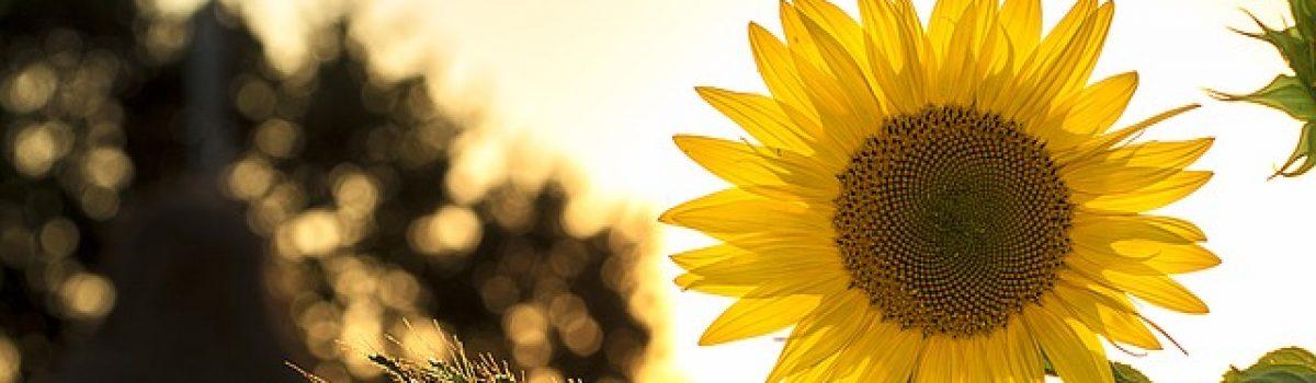 Ngày nắng – Thơ Tình Cuối