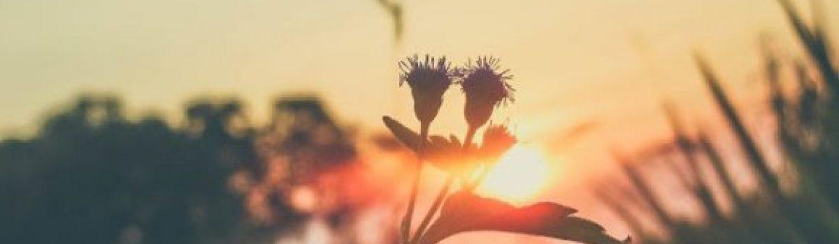 Vẩn vơ cuối hạ – Thơ Cúc Hoa