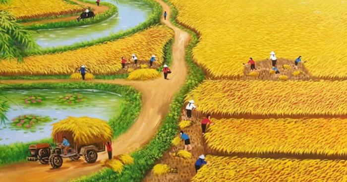 ta canh dong lua chin - Nhớ mùa gặt lúa đêm - Tản văn Quang Định