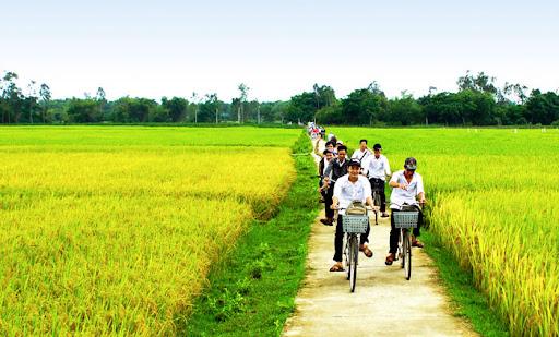 unnamed 36 - Nhớ mùa gặt lúa đêm - Tản văn Quang Định